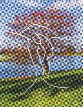 Landscape (Cherry Tree)